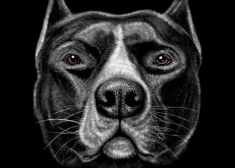 Pitbull Head t shirt illustration