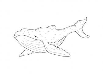 Whale sea animal kids vector t shirt printing design